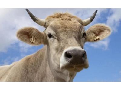 扒一扒,为什么美国的牛肉那么便宜?可以天天吃牛肉