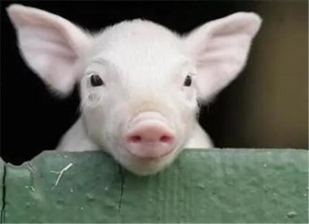 跨省销售27吨非洲猪瘟肉制品 对杨某依法批准逮捕