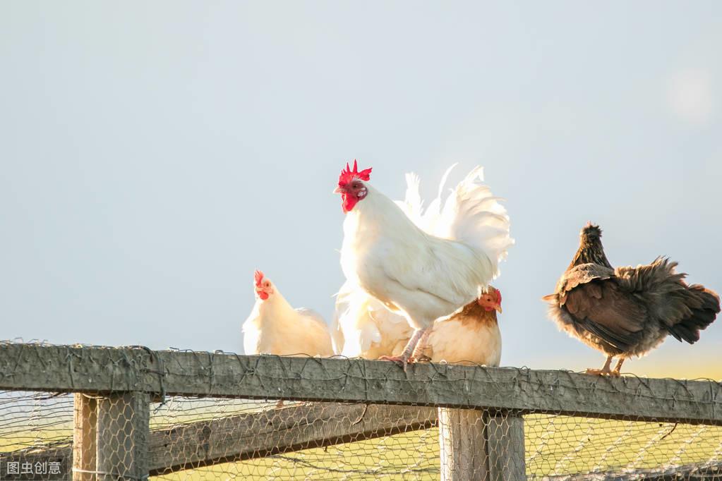 猪价下跌13.5%,家禽价格紧随其后 急剧下跌32%!